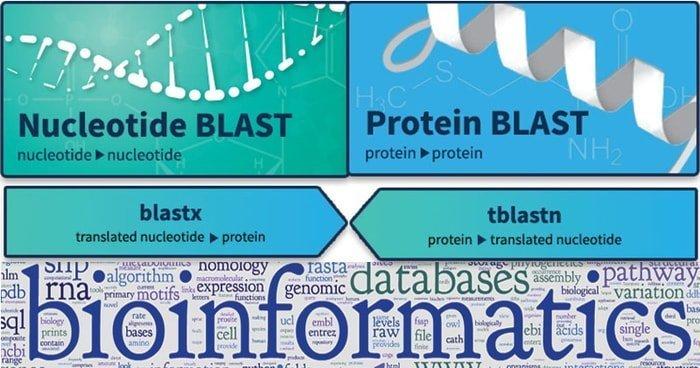 blast bioinformatics tool