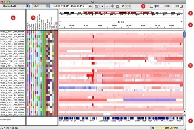 igv bioinformatics tool