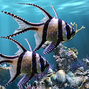 The real aquarium - Live Wallpaper for android
