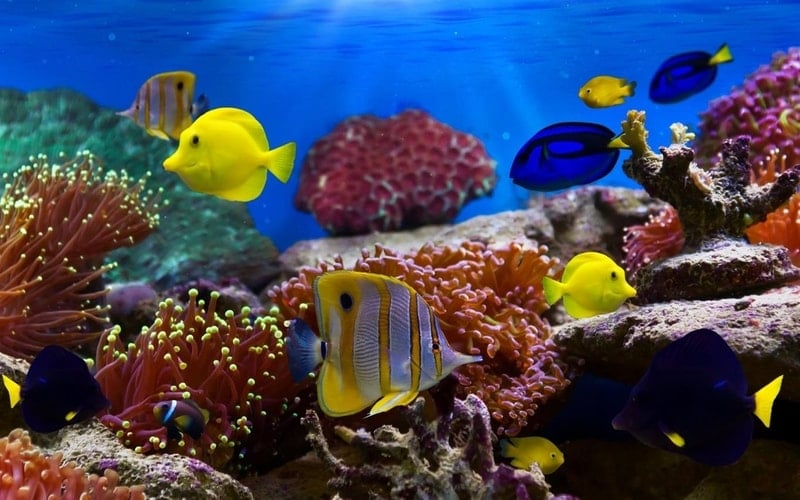 fish_and_corals - Windows wallpaper themes