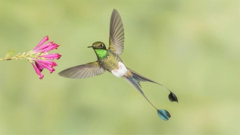 national_geographic_hummingbirds - Windows wallpaper themes