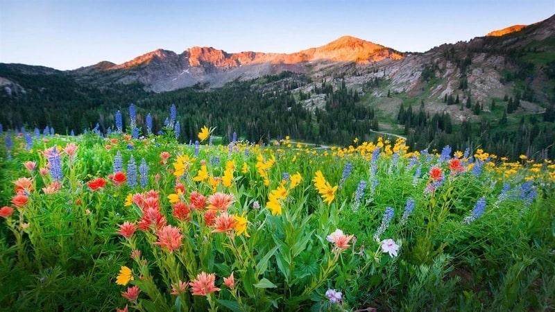 wildflowers_premium - Windows wallpaper themes